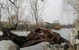 別樣美麗的初春瘦西湖