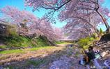 日本這7處賞櫻勝地,每個都有不能錯過的理由,少一個都不完整