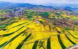 漢中已迎來油菜花最佳觀賞期