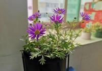 光照過度強烈的陽臺上可以種這幾種燦爛開花的植物