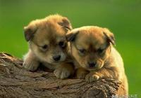人摸狗的頭是表示友好,那麼狗狗是怎麼想的呢?狗子的世界瞭解下