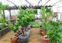這4種水果在家播種,扔土裡,前期觀葉,後期還能收穫水果