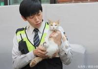 長腫瘤的流浪貓被丟垃圾桶,被暖心警爸救後霸氣收養並聘它當警貓