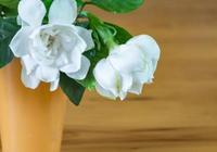梔子花可以吃嗎 吃梔子花有什麼好處