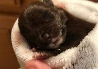 小夥撿回一隻小狗,照顧2天就受不了了,竟把小狗悄悄放進貓窩裡