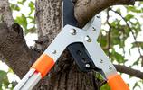 家有十幾畝果園,條件允許扔了樹枝剪,買新式園林神器,高級實用
