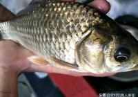 野釣子線用得好,春季鯽魚釣得多,老釣友春季野釣鯽魚的子線技巧