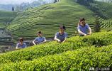品春茶的季節到了,貴州這些地方的名茶你都喝過嗎?