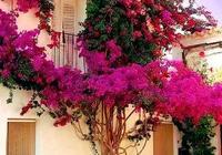 有空地的話,定要種上這6種花苗,開花美如畫,打造自己的御花園