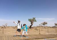 大漠與胡楊