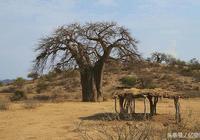 亙古不變的荒野獵人——哈扎比部落