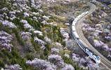 說日本的櫻花列車美,那是因為你沒見過我國的這趟列車