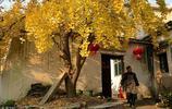 陝西農家的院子,無論走向城市何方,那裡依然是心裡最牽掛的地方