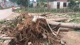 山東一農村遭遇幾十年罕見大風 屋頂掀翻大樹連根拔起