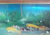乾貨滿滿丨如何預防錦鯉魚病引起的錦鯉趴缸?