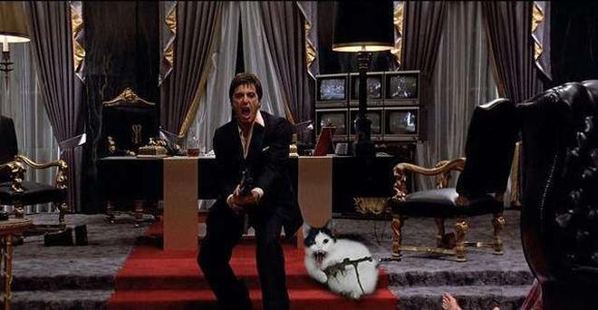 """一張""""握著機關槍的貓""""照片,引發的網友PS改圖大賽"""
