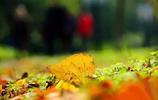 彙總七個秋季最美的合肥風景,你愛上了哪個地方的秋景?