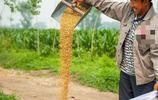 """曾經北方農村四大累活之一""""收麥子"""",如今地頭變成這樣子了"""