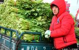 芥菜櫻子五毛雪裡蕻一塊,早市上真有魚目混珠的,你買對了嗎?