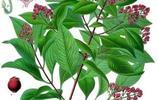"""這些平常多見的植物原來也是""""舶來品"""",你知道它們來自哪裡嗎?"""