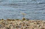 我的旅行日記 遊鴨公島 島上的活動比較多 你可以盡情的遊玩