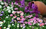 打死都不能放家裡的7種花,再好看也不能養,看看你家養了嗎?