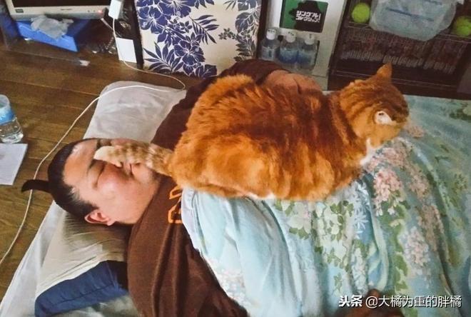 """""""鏟屎官我錯了,我舉起手來了""""12張有趣貓咪圖能讓你看著就想笑"""