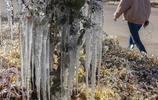 甘肅嘉峪關氣溫驟降 路旁綠化帶現冰掛