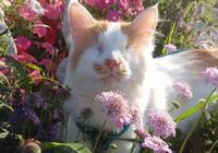 失明老貓孤獨生活14年,周圍貓咪看不起它,小貓靠近它換來一個家