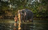 """拒絕騎乘大象!泰國騎象不再是""""必修課""""給大象洗澡才是真愛!"""