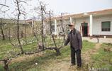 把桃樹整成孔雀形,晉南這位8旬老農打造出最美庭院,一起去看看
