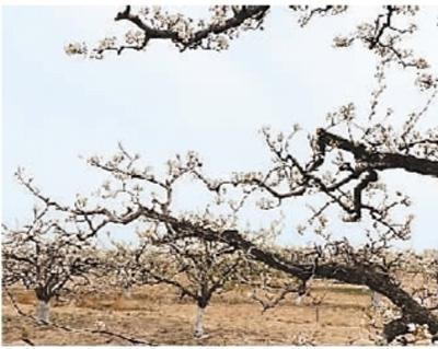 春季如何養生?(杏林尋寶——中華傳統醫藥漫談)