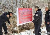 敦化市富爾河流域中華秋沙鴨增至100餘隻