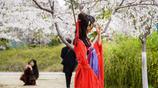 玉淵潭櫻花節迎高峰,花海爛漫醉遊人,漢服美女和櫻花相映成趣