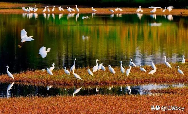 武漢漲渡湖溼地公園:城市中的小清新,憑實力成為網紅打卡地