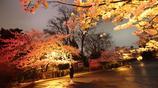 """青島中山公園櫻花夜色撩人,沒了擁擠的人群,成""""網紅""""打卡地"""