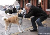 """國產""""忠犬""""9號上映,十年製作,能敵一部《忠犬八公》?"""