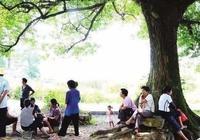 散文:夏天是無私又慷慨的,她把色彩送給山林小溪,獻給綠色田野