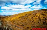 金黃色的阿爾山,充滿著秋天的氣息