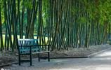 北京的這一座公園有蜀南竹海的竹園別緻,是4A景區,可以免費參觀