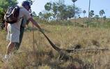 印度島上生活大量科莫多巨蜥,遊客竟冒著生命危險親密接觸