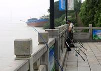 家住長江邊之釣者