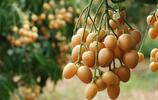 這5款水果,很多人都沒見過說不出名字,全認識的就算厲害了!