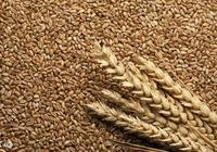 全穀類食物怎麼吃,餐後血糖不升高