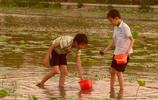 中國農村動物:田螺