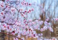 生命中的知己相約:要想樹一樣,來年春天的時候,我們一起開花。