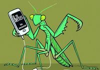 國畫中的螳螂如何畫?