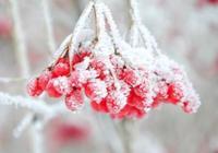 霜降時節有什麼氣候特點?