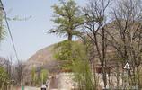 山西7旬老人守護1棵能延年益壽的千年古樹32年,看他生活成啥樣