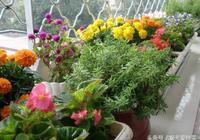3個養花小妙招用來養花,盆栽長得綠壯開花多,不用上肥料了